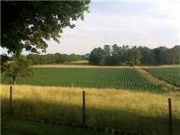 Stephenson Rd., Hillsboro, TN 37342